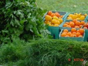 Abundant harvest!